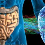 Afbeelding 2e hersenen onze darmen